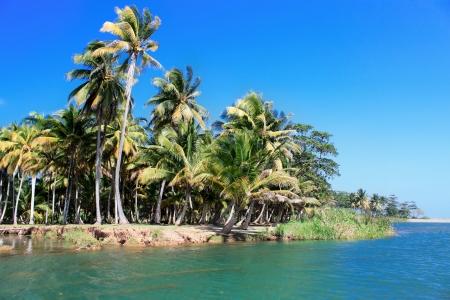 Green palm Wald, schöne Landschaft in Baracoa, Kuba Standard-Bild - 17825223