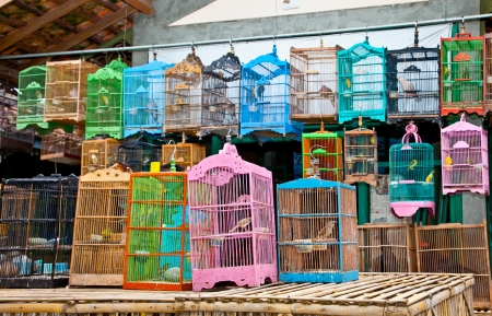 liberated: Litle birds in the cage. Java, Indonesia. Freedom concept.
