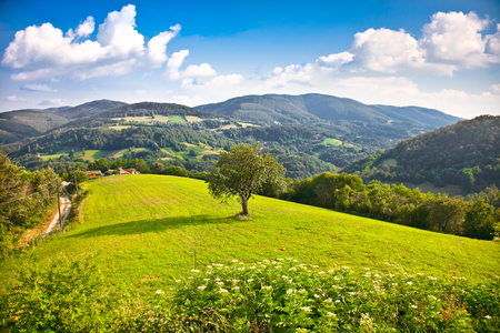 Tree on the midle of meadow , Divcibare mountain, Serbia.    Stock Photo