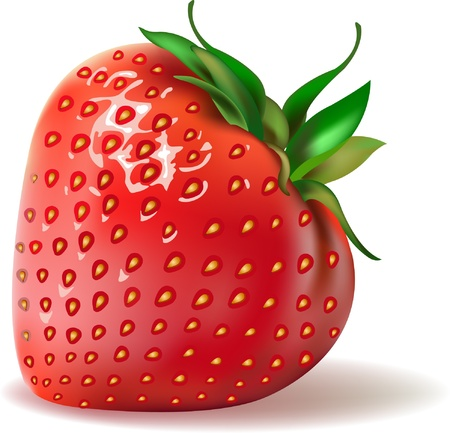 strawberries. realistic vector illustration
