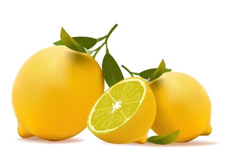 レモン。現実的なベクトル イラスト ベクターイラストレーション