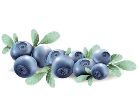 blueberries. realistic vector illustration