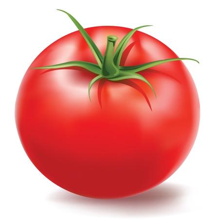 トマト  イラスト・ベクター素材