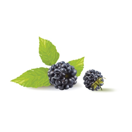 bramble: blackberry