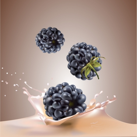 milk and blackberries  realistic vector illustration Illustration