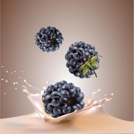 milk and blackberries  realistic vector illustration Illustration