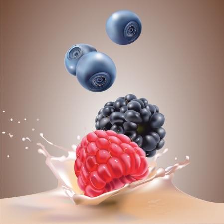 gelatina: leche, moras, ar�ndanos y frambuesas ilustraci�n vectorial realista Vectores