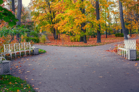 Autumn evening in the Alexander Park of Tsarskoe Selo. Benches on a branching of park footpaths.