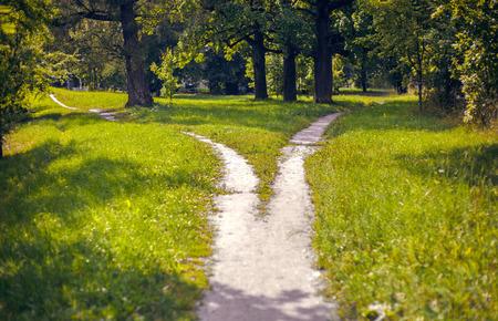 Vertakking van een voetpad in het park Stockfoto