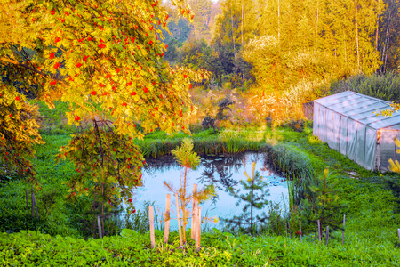 A small pond on the home plot, a small spruce, ashberry branches and a greenhouse