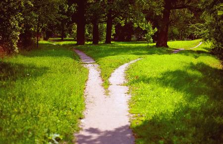 De weg splitsen in het park Stockfoto - 94605556
