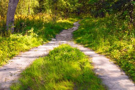 Die Zusammenführung der beiden Wanderwege zu einem im Wald