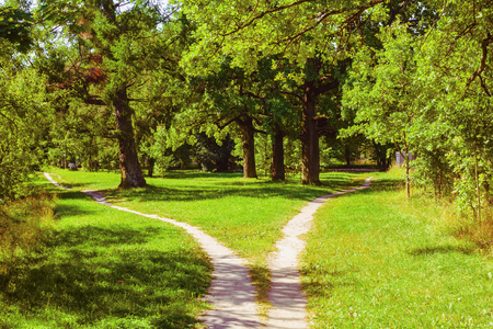 Splitting the way in the park, the summer landscape Archivio Fotografico