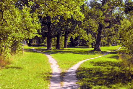 Hiking trail diverges in different directions in the park