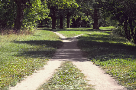 Two footpaths in the grass intersect in the park on a sunny summer day Banco de Imagens