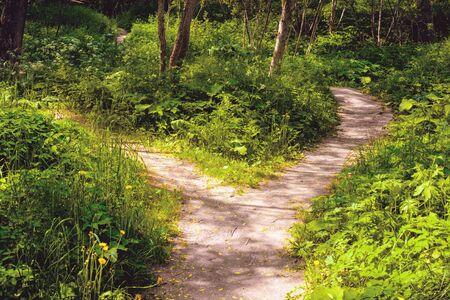 Im Wald teilte sich der breite Fußweg in zwei schmale, die sich vielfältig aufteilen. Sommerlandschaft.