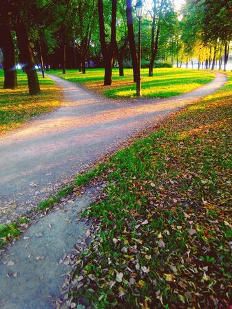 Splitting a footpath in a park in the sunset light. Evening landscape