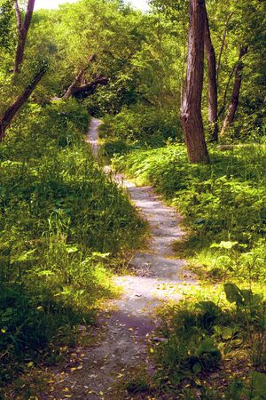 Uneven protopted trail in forest. Summer landscape