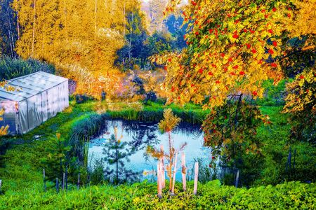 A small pond on your home site, spruce, branches of mountain ash and greenhouse Stock Photo