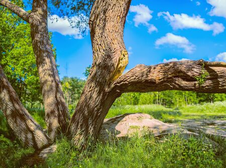 A large branch split from the tree under its weight. Summer landscape with green grass, forest and blue sky. 版權商用圖片