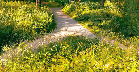 Two pedestrian paths in the green grass of the Park merged into one. Summer landscape