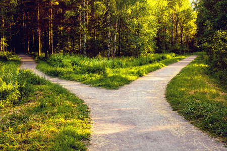 Divergence of directions. The wide path in the park is divided into two trails.