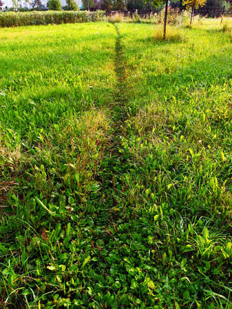 A narrow, slightly trodden straight path in green grass, stretching into the distance in the rays of the sunrise. Фото со стока