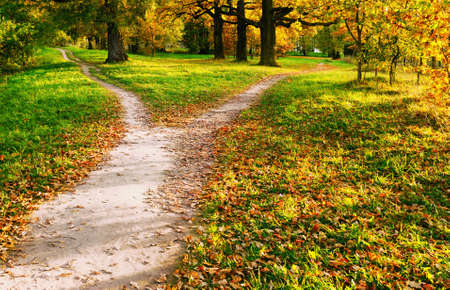 The wide walking trail divides into two narrow ones going in different directions. Autumn landscape in the rays of sunset