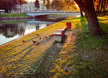 Bench and birds on the bank of the river in the beautiful light of the rays of the rising sun. Autumn city landscape