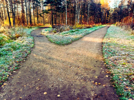 The road is divided into two alleys, diverging in different directions. Park, late autumn, rays of the setting sun, shadows and frost on the grass