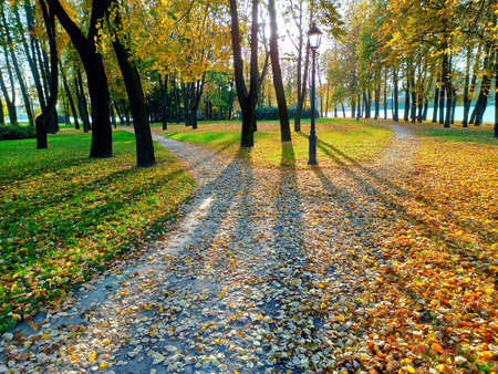 The alley in the autumn park, covered with fallen leaves, is divided into two paths diverging in different directions. Autumn landscape