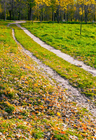 Two footpaths among the grass are parallel and lead in the same direction. Autumn landscape 版權商用圖片
