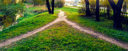 In the park on the approach to the city, two paths merged into one. Summer landscape