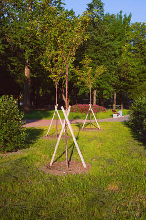 The park has three young trees, fortified with triangular supports from boards