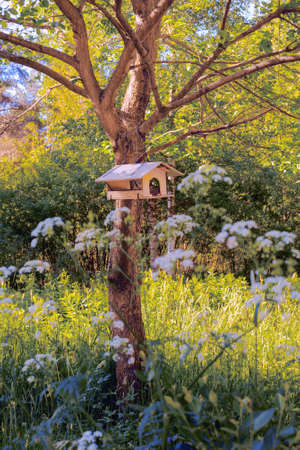 Wooden house-feeder for squirrels and birds is fixed on a tree in the park