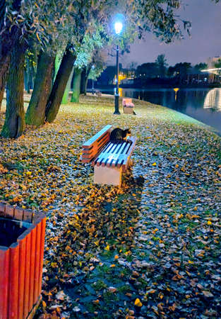 In the cold light of the lantern at night on the banks of the river on a bench sits a cat and looks forward, on the water 版權商用圖片