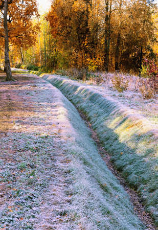 The bed of a dehydrated canal, overgrown with grass and covered with frost in the forest on an autumn morning.