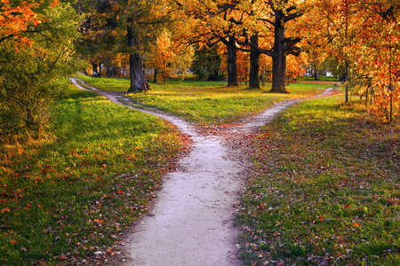 A wide trail in the rays of sunset in an autumn park branches into two narrow ones, leading in different directions