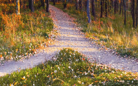Two paths merge into one in the autumn park among trees and grass strewn with fallen leaves.