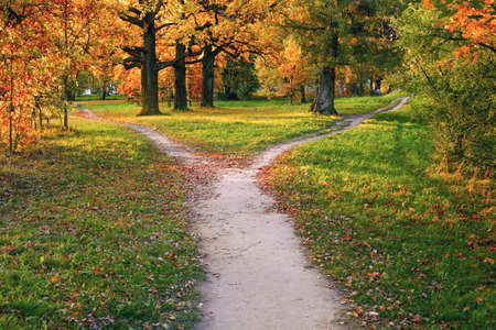 A wide trail strewn with fallen autumn foliage is divided into two paths that diverge in different directions. Autumn landscape. 版權商用圖片