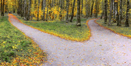 A wide trail in the autumn park forks into two hiking trails going in different directions.