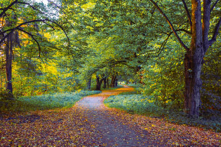 Yellow and orange foliage on a winding road in the woods in the evening and a lone departing traveler in the distance. Beautiful autumn landscape. 版權商用圖片