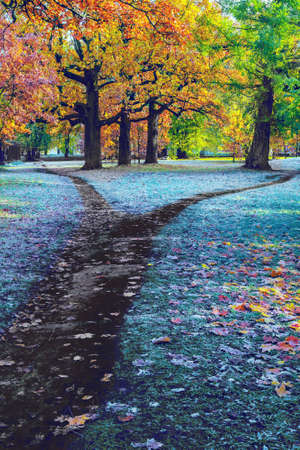 Wide dark autumn trail is splitting into two footpath in the park. Autumn landscape