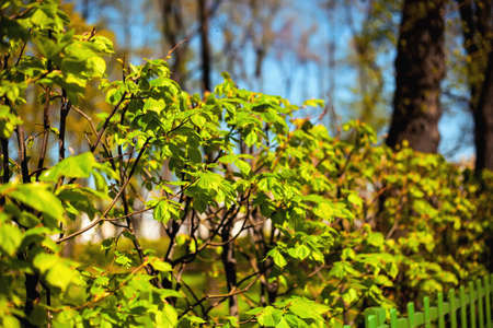 Fresh bright green foliage of plants in early spring in the park