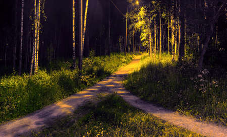 Two paths among grass and trees merged into one. Night view in the park with electric lighting of lanterns.