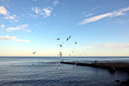 Seagulls sitting on the water and flying in the air on the beaches of Odessa, Ukraine.