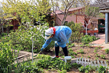 Care of plants and fruit trees in the home garden during quarantine - whitewashing of trees from pests.