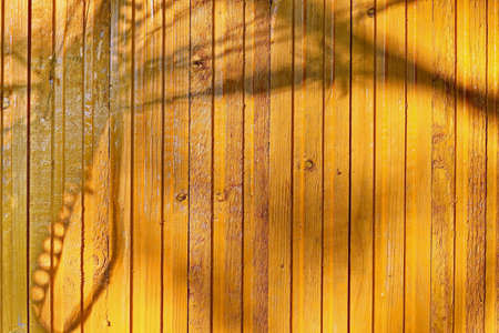 Painted wooden planks and cutaway wood structure used as a base and backgrounds. Stock Photo