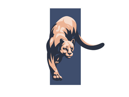 Puma or lioness sneaks on its paws. Vector illustration.
