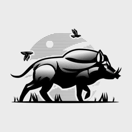 An adult wild boar with large tusks. Goes forward. Birds fly over it. Hog. Vector illustration.